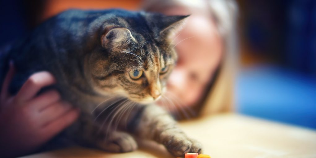 How To Make Friends With Your Cat